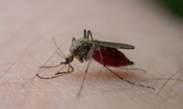 Come eliminare le zanzare in giardino